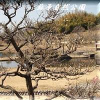 蘇原自然公園 梅園