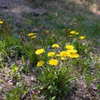 気がつけば、5月も終わりに、八ヶ岳の新緑も盛りに!