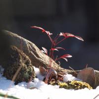 由布院温泉 2月の寒い朝