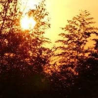 シロポイの日向ぼっこ