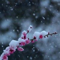 この時期に・・・雪・・・雪・・・雪・・・
