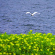 琵琶湖の夏