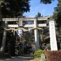 埼玉県坂戸市の大宮住吉神社へ河津桜を見に行きました 2017年2月25日