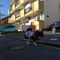 久しぶりのお散歩(^^♪