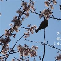 3/19身近な春を探しに…2
