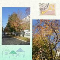桜木町の紅葉🍁
