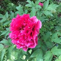 花々 最盛。