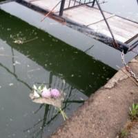 カルマ解消㉙のお花を流しました