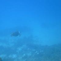 海の中が一番快適!!☆