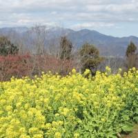 菜の花と丹沢