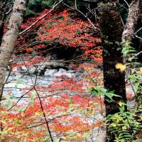 別府峡の紅葉・黄葉(高知県香美市物部の別府峡 2015年11月23日)