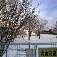 新田公園に積雪