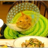 食事のときは・・・
