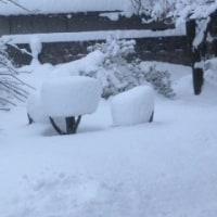 昨日の晩から大雪!