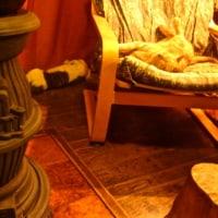 無防備な猫の寝姿