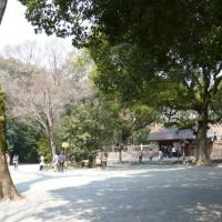 名古屋市熱田神宮の太郎庵椿 2017年3月19日(日)