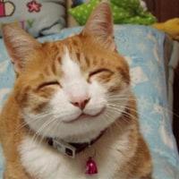 可愛い猫!悩まされる猫!