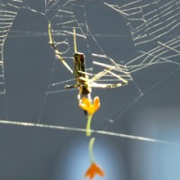 お掃除蜘蛛さん