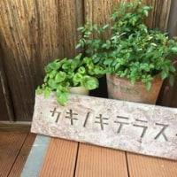 カキノキテラスの山形米澤豚のカツ&揚げ茄子カレーを食べました