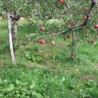 無農薬有機肥料