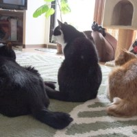 渡り鳥的猫生活