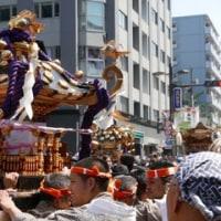 三社祭を見に行く