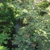 昭島市美堀町にて「新緑が綺麗です」