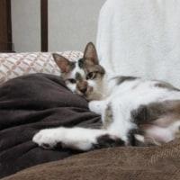 猫とふろしきの日