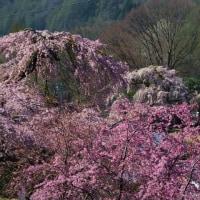 16年4月~木祖村~田ノ上観音~ベストショツト
