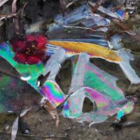 色彩の氷紋