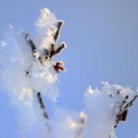 樹氷の輝きで迎えた朝 1