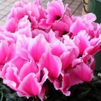 12月を代表する花から