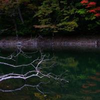 十和田・奥入瀬・八甲田・白神山地、紅葉の旅 池 1