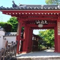 75 アチャコの京都日誌 再びの京都 乙訓寺