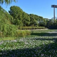 春日公園のお散歩ショットからp2(D5500,18-140mm)