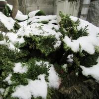 初雪&誕生会