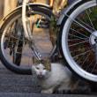 自転車とネコ