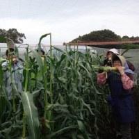 農業実践教室第22期:9回目~恵みの雨の中、水曜コース実施しました
