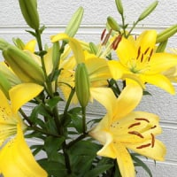 庭の花便り