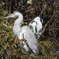 第137回いずみの国の自然館クラブ観察会~黒鳥山公園周辺~