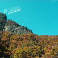 松茸山の・・・♪