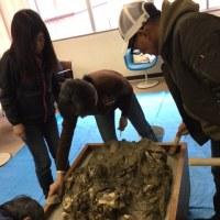 牡蠣の化石修復はひと段落