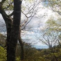 名残りの桜を追いかけて~黒峰権現