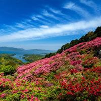 2017 九十九島を眼下に長串山のツツジ 4(春だからボーッとしていたわけではないのだが) 《佐世保市鹿町》