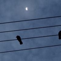 半月と、カラス。尾張町、午前6時。