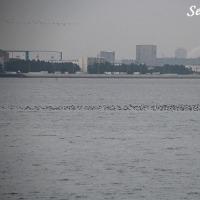ザクロジャム完成~!&海の渡り鳥♪