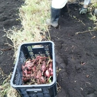 干し芋が作りたくて ・・・ 野菜干しバスケットに惚れる