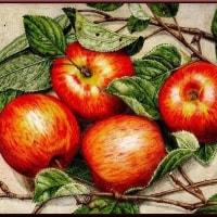 色鉛筆画341 (林檎)