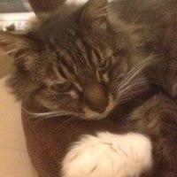 眠たそうな表情がある猫