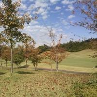 紅葉を横に感じてゴルフかな
